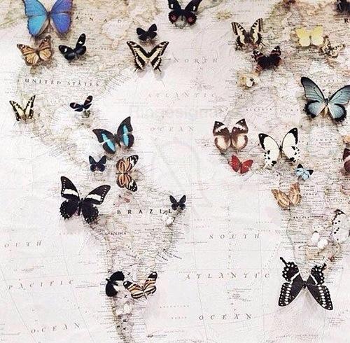 papillons carte monde