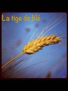 La tige de blé